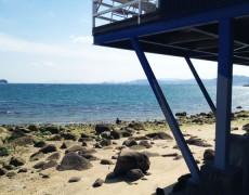 海辺はきもちいいですよ〜♪