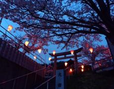 大野ICからの夜桜見物
