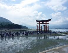 厳島神社の大鳥居 今週末はチャンス!
