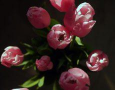 春ですよ〜(^^)/