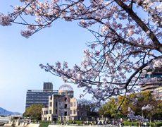 桜満開〜℃℃℃!